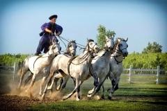 lovasbemutató