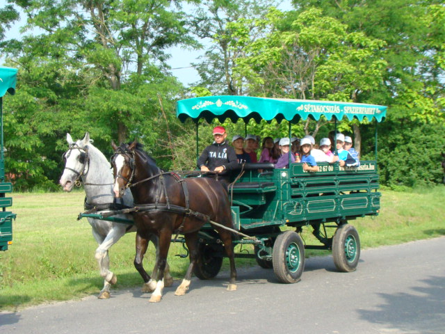 lovaskocsi1
